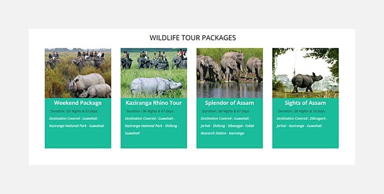 tour packages for Kaziranga tour India